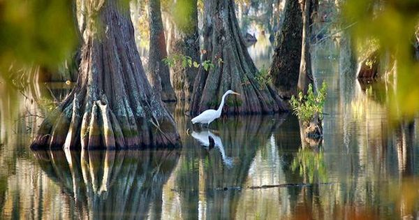 louisiana-nature-jpg-600x315_q80_crop-smart